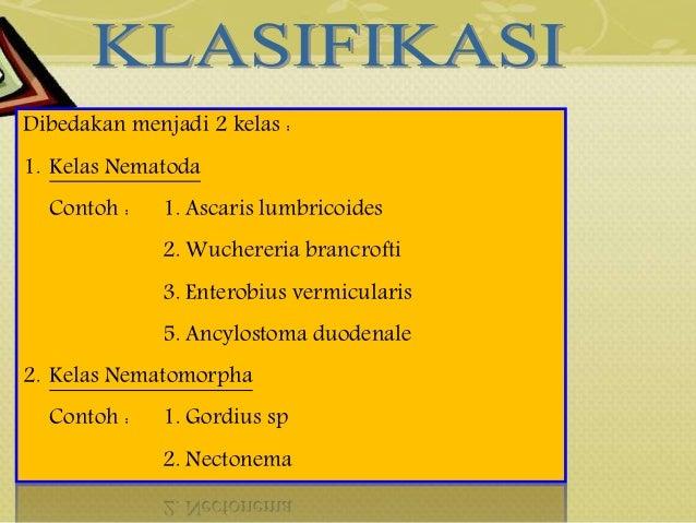 kelas nemathelminthes dan contohnya