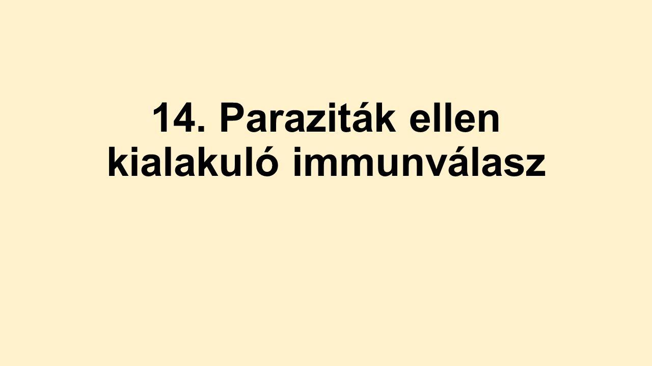 paraziták elleni adaptív immunválasz hpv papilloma