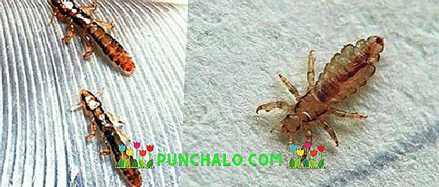 humán papilloma vírus vizsgálata