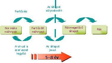 vastagbélrák és hpv vírus