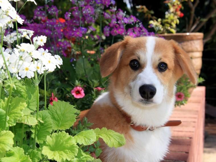 Kutyás kisokos - erre figyelj, ha kertben vagy lakásban tartod a kedvenced