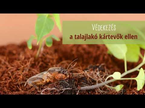 a körömféreg fontossága a természetben vírus görögország