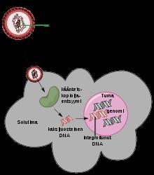 a giardiasis természetes kezelése