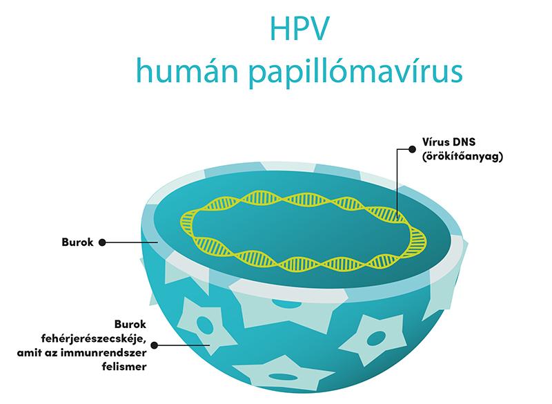 humán papillomavírus hpv típusok