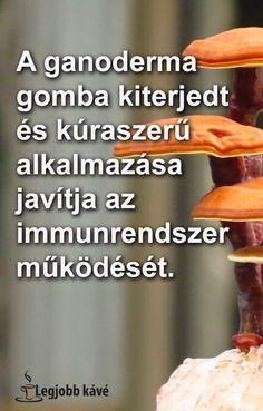 Pecsétviaszgomba (Ganoderma lucidus, reishi, ling zhi)