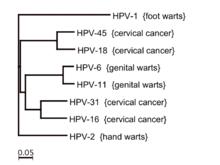 papilloma vírus 6 11 rezonancia a paraziták kezelésére