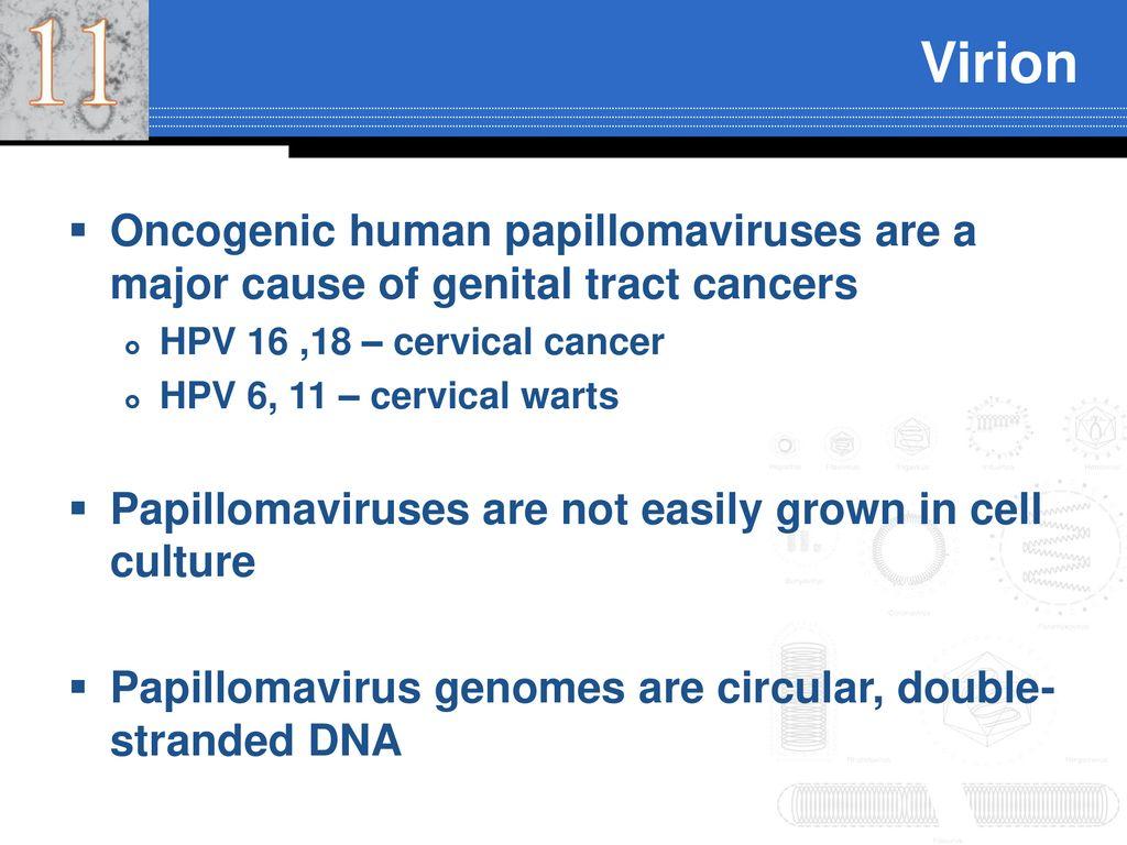 papillomavírus 16 18
