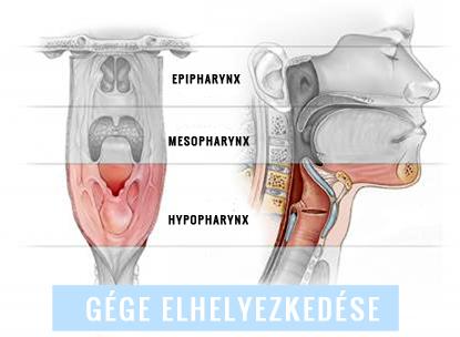 echinacea tinktúra a genitális szemölcsök áttekintéséből